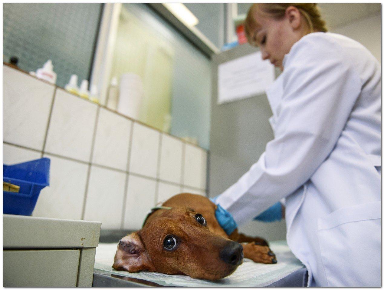 Укусила собака, куда обращаться, к какому врачу