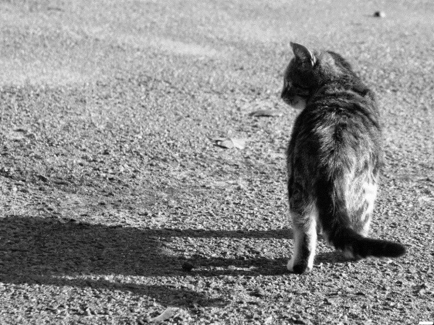 Как умирают кошки