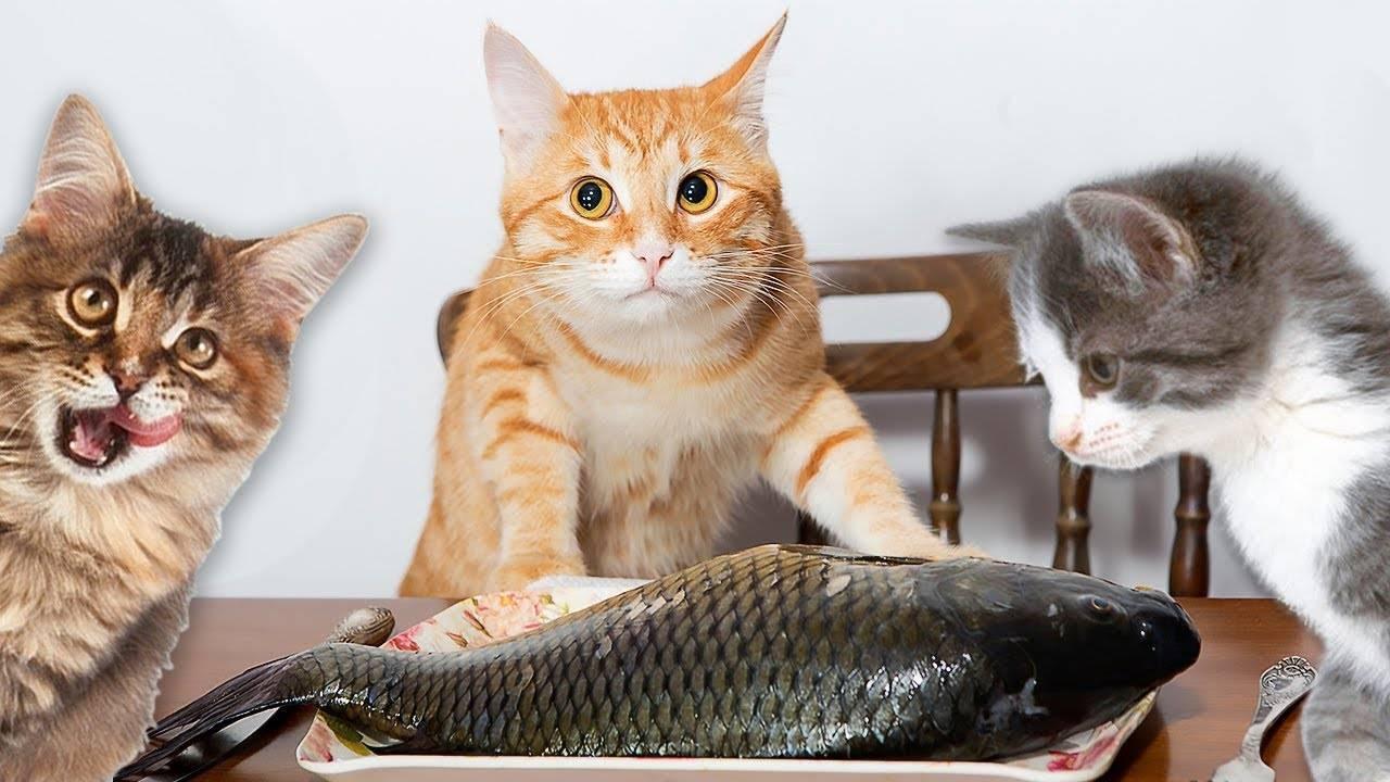 Рыба для кошек — примеры какую можно и нельзя