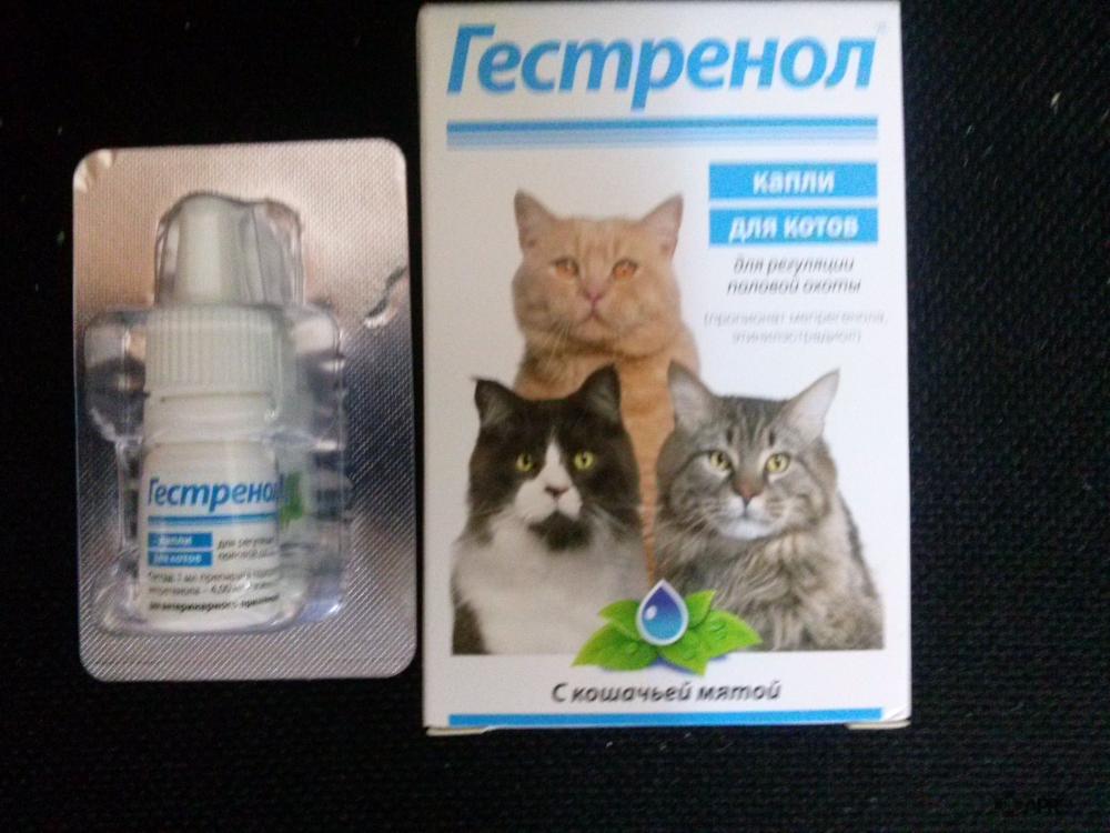 Гестренол для кошек: капли, таблетки, инструкция