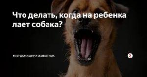 Как отучить собаку лаять на собаку и на всех подряд