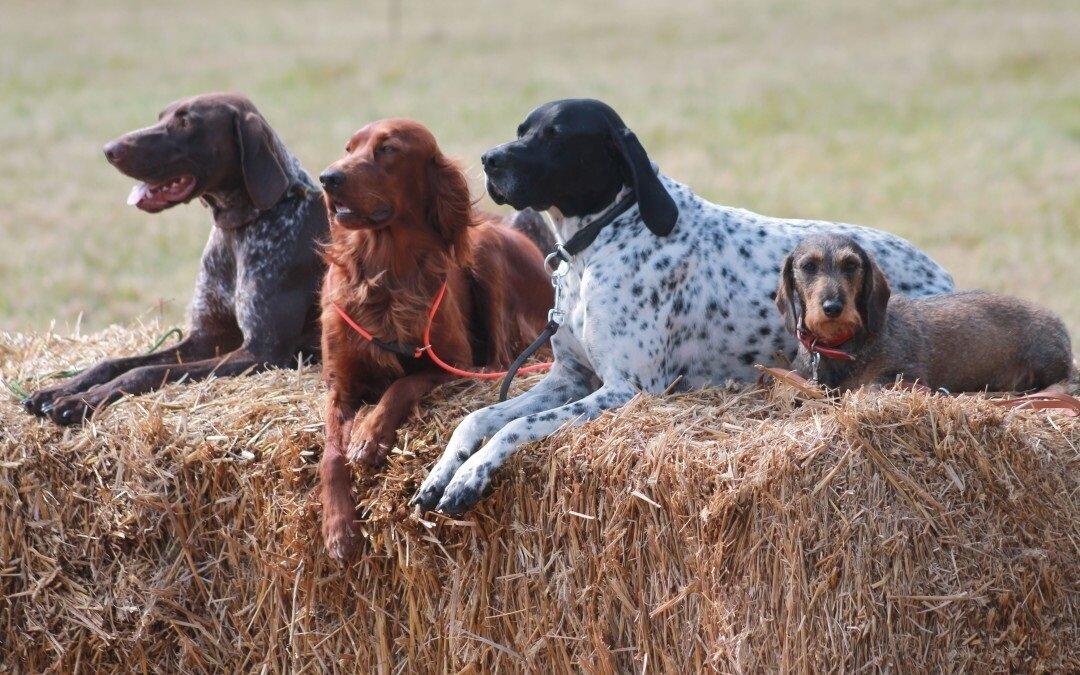 Клички охотничьих собак мальчиков и девочек