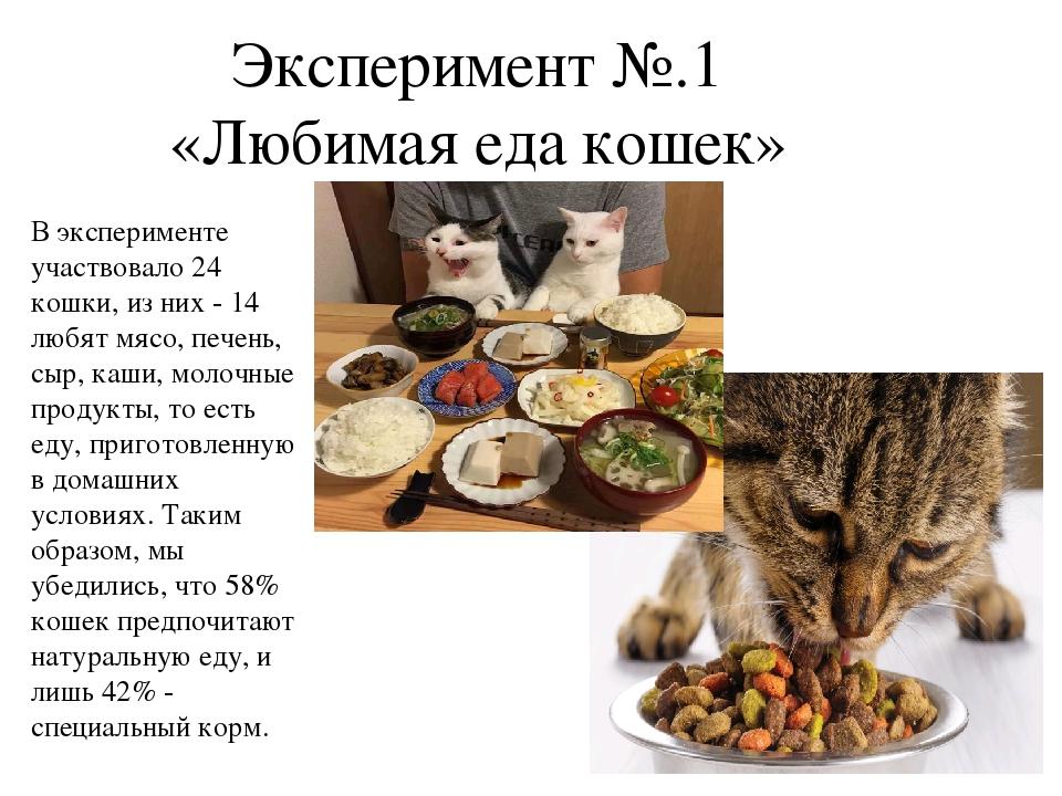 Правильное Питание Для Кошки Натуралкой