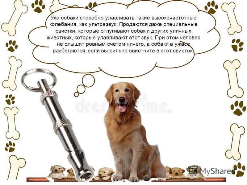 Ультразвук для собак: раздражающие отпугиватели питомцев