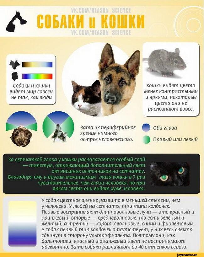 Как видят собаки наш мир и какие цвета различают