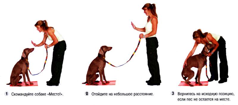 Дрессировка собак в домашних условиях для начинающих