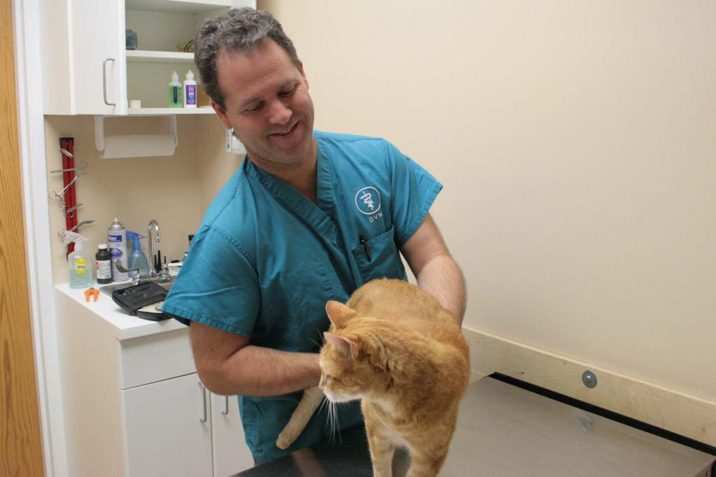 Мочекаменная болезнь кошек: причины, симптомы, лечение и профилактика