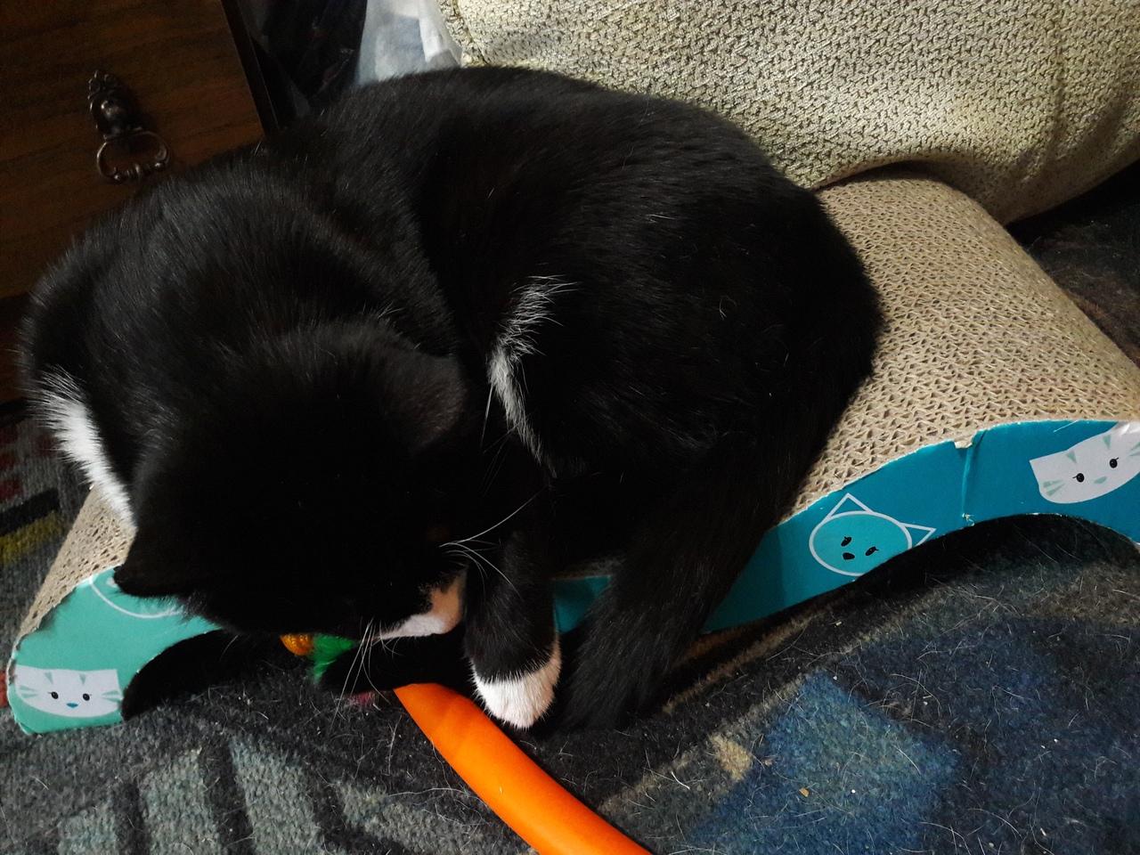 Почему беременным нельзя гладить кошек и контактировать