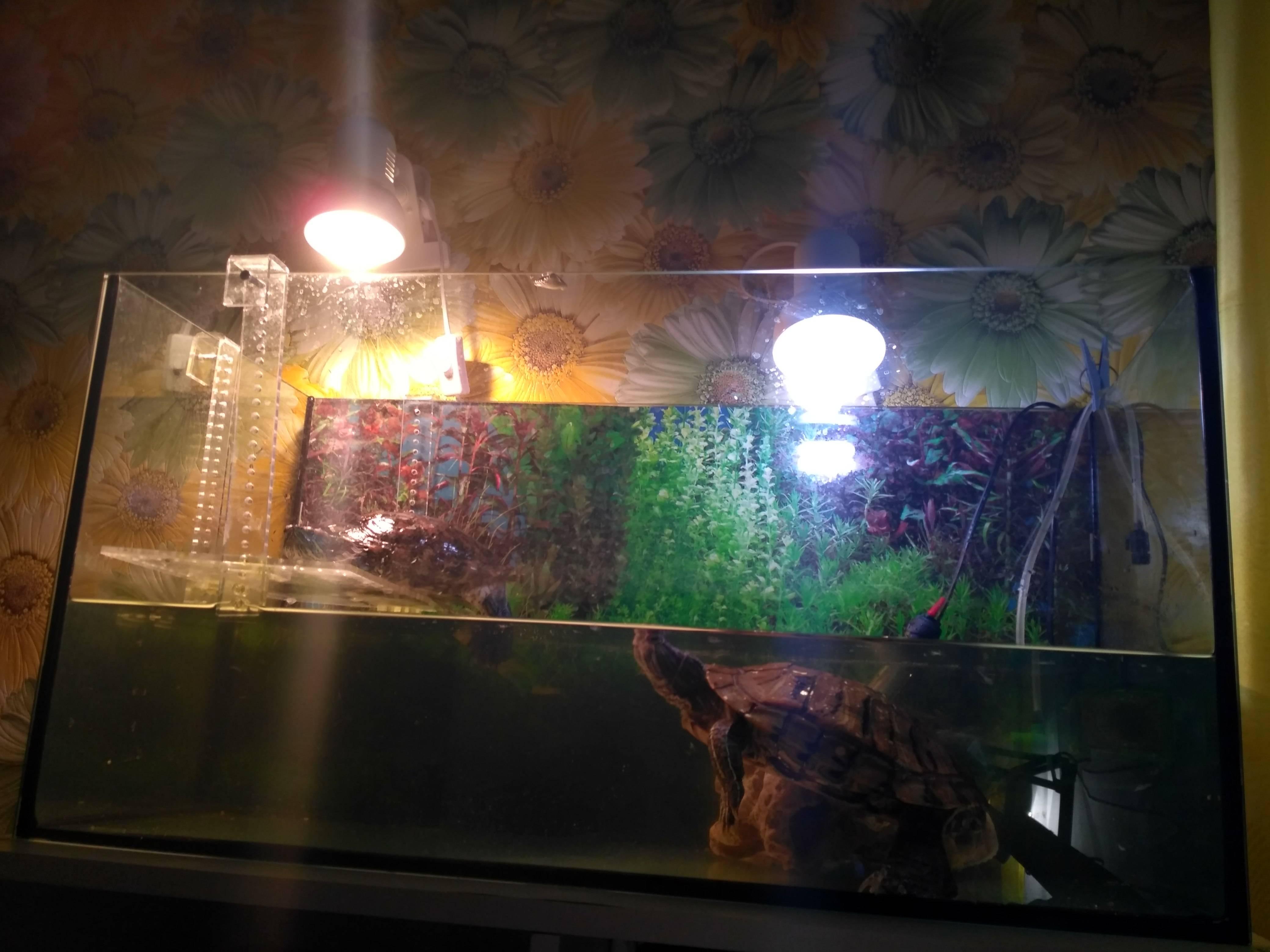 Ультрафиолетовая лампа для черепах — какую выбрать