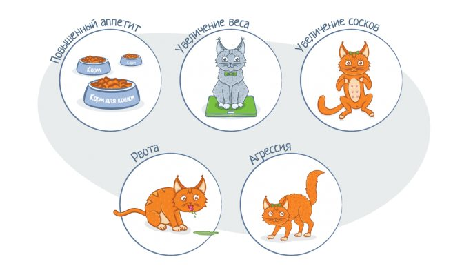 Сколько длится беременность у кошек: продолжительность