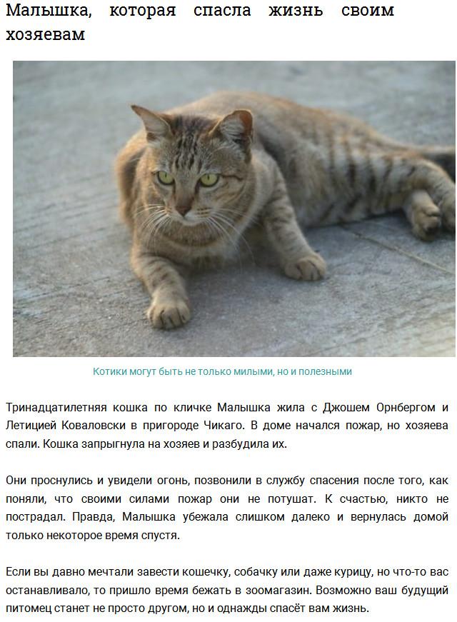 Коты, спасшие жизнь своим хозяевам