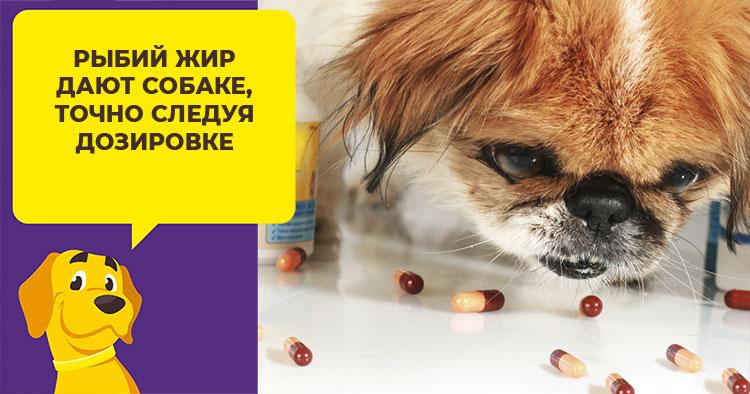 Рыбий жир для собак: как и сколько давать