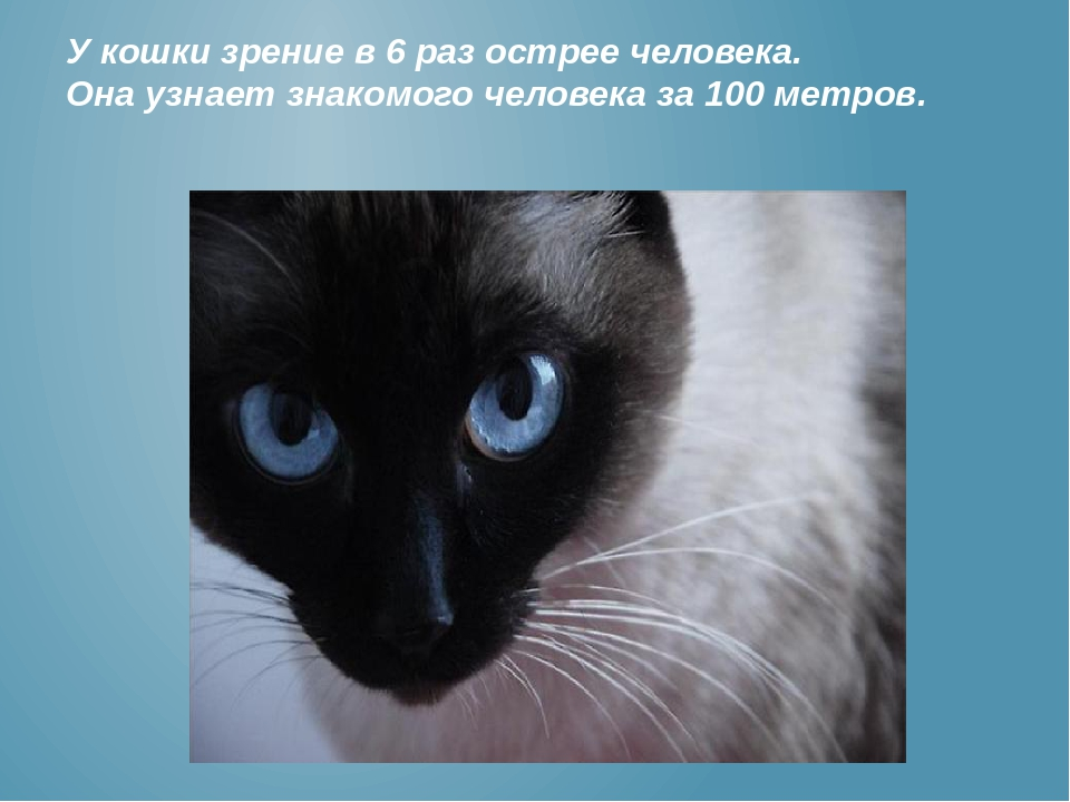 Различают ли кошки цвета и как видят окружающий мир