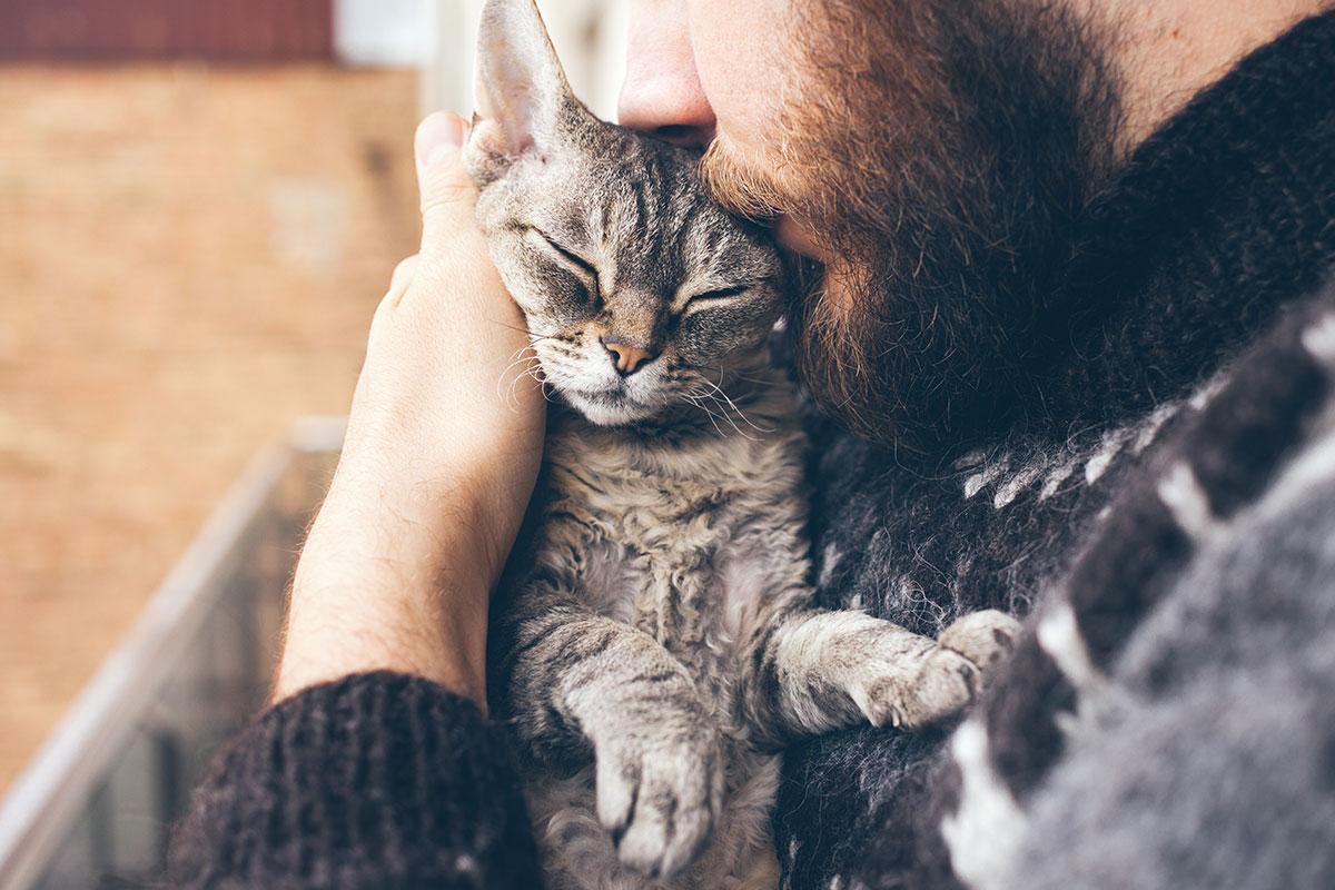 Кошачья любовь: как коты и кошки ее проявляют