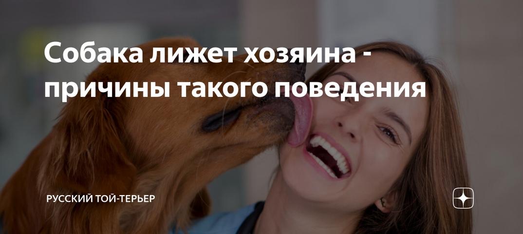 Собака лижет человека за ноги, руки и лицо: почему
