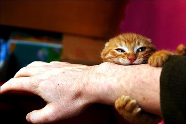 Почему кошка кусает руку когда её гладишь