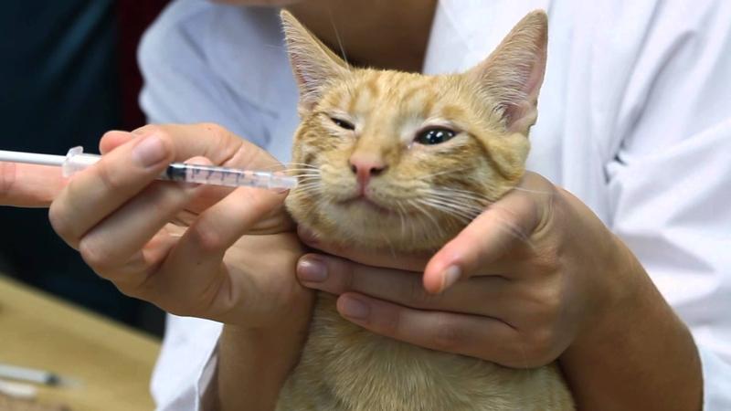Насморк у кошки: причины, терапия и меры профилактики