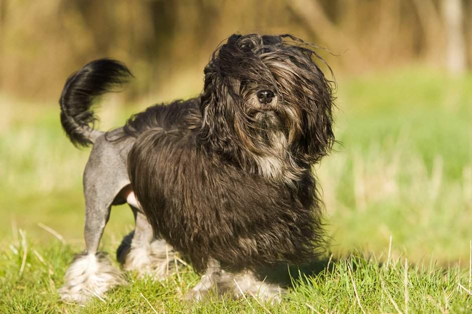 Самая дорогая собака в мире: топ 10 пород