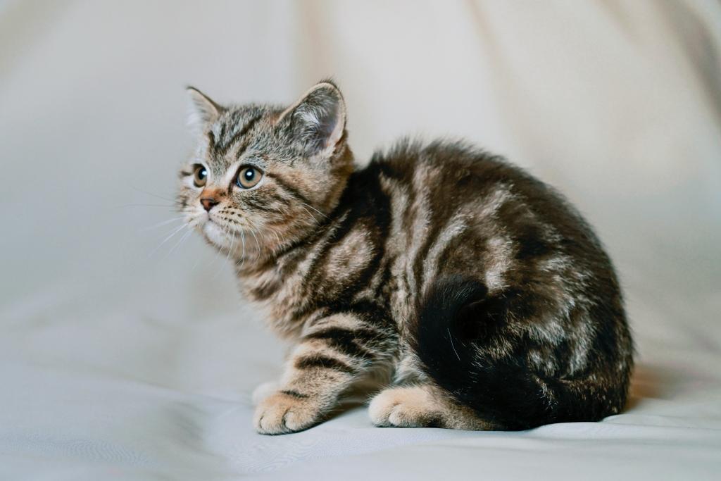 Мраморная кошка