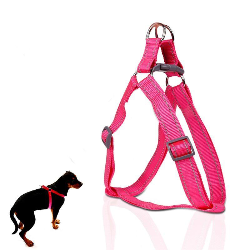 Как одеть шлейку на собаку правильно: инструкция