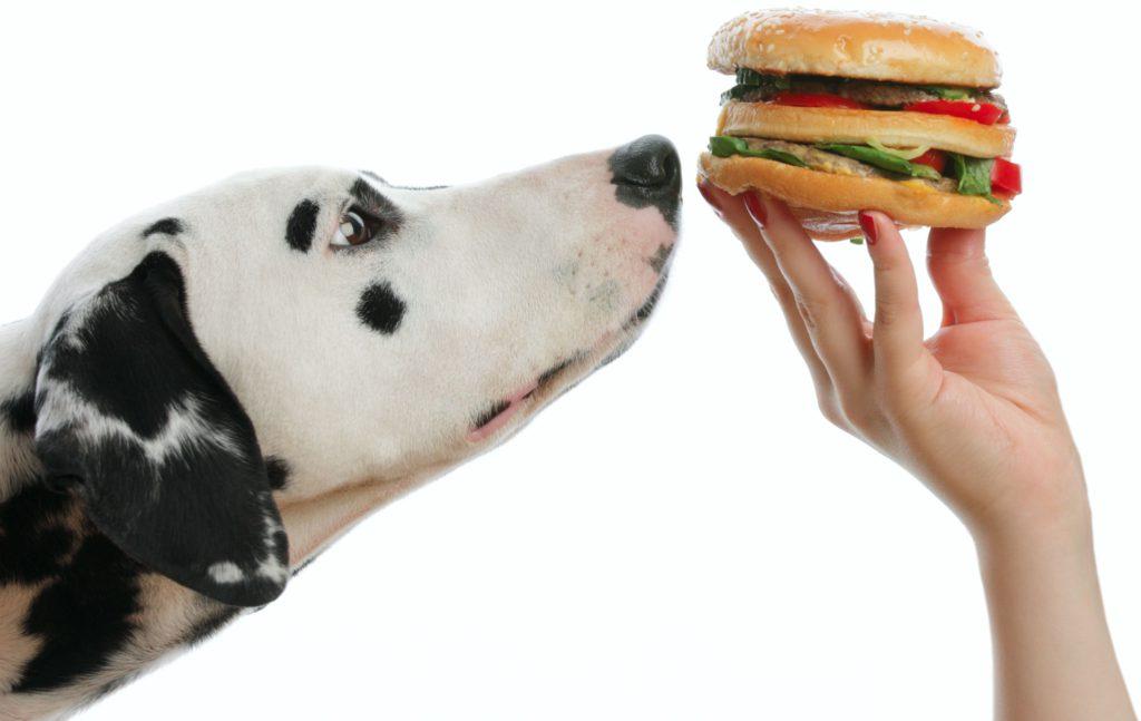 Собака не ест: почему отказывается от еды питомец