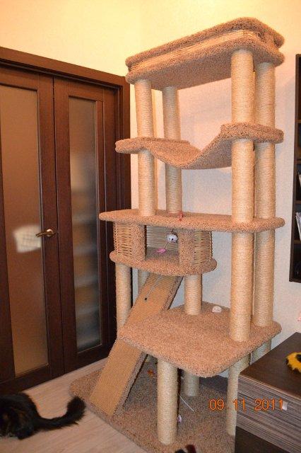 Что такое игровой комплекс для кошки и каким он должен быть