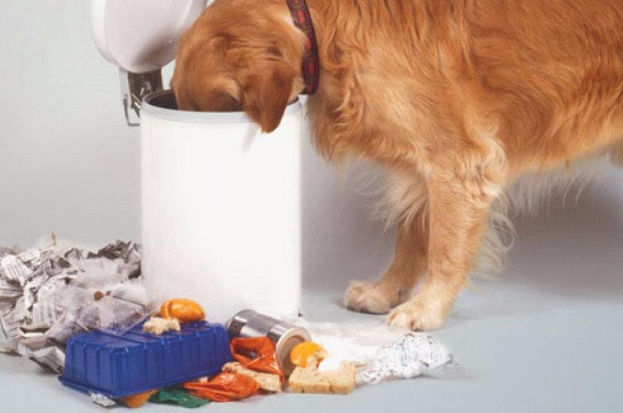 Почему щенок ест землю и камни и что делать хозяину