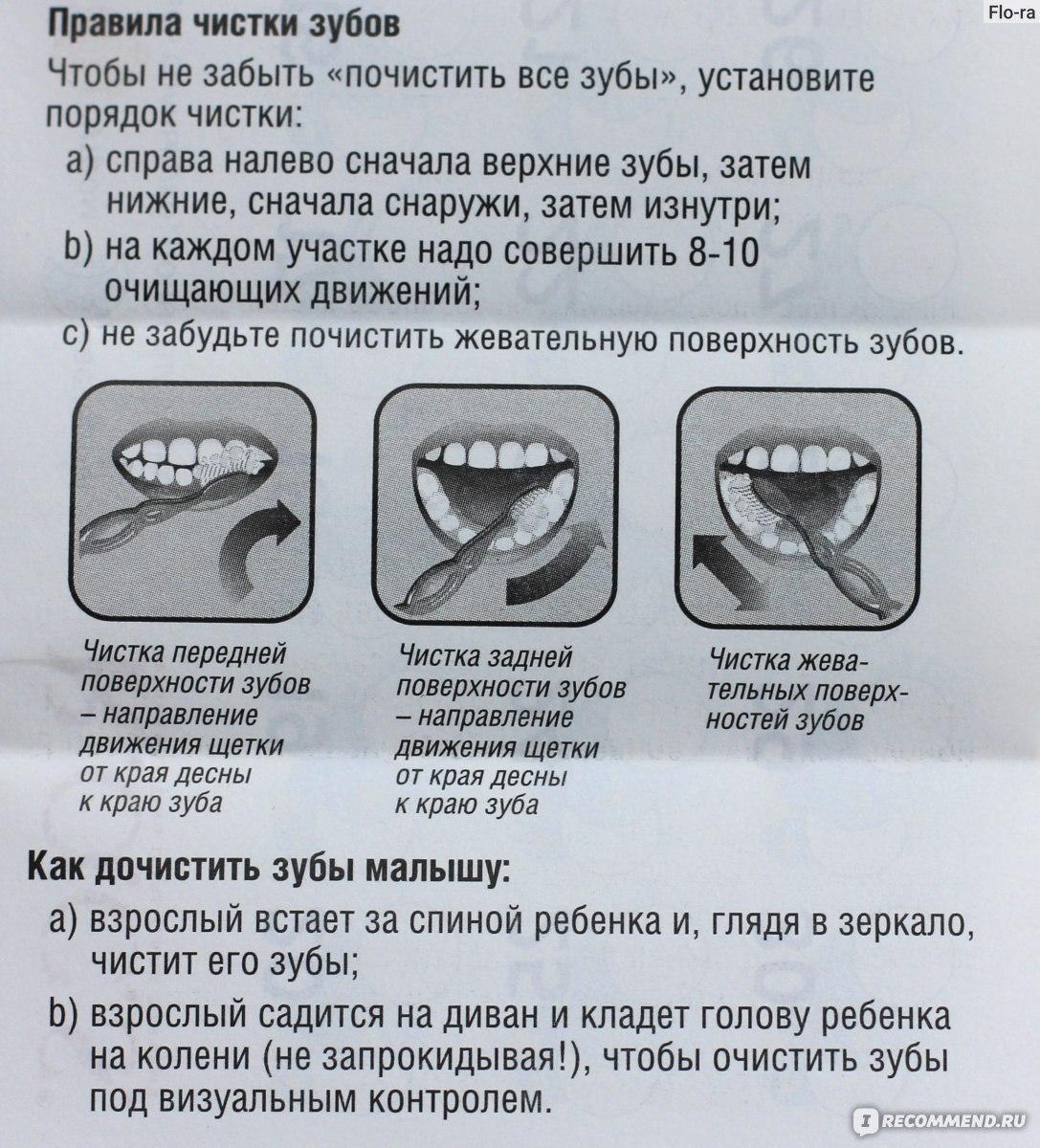 Правила чистки зубов питомцу: от выбора щетки до количества процедур