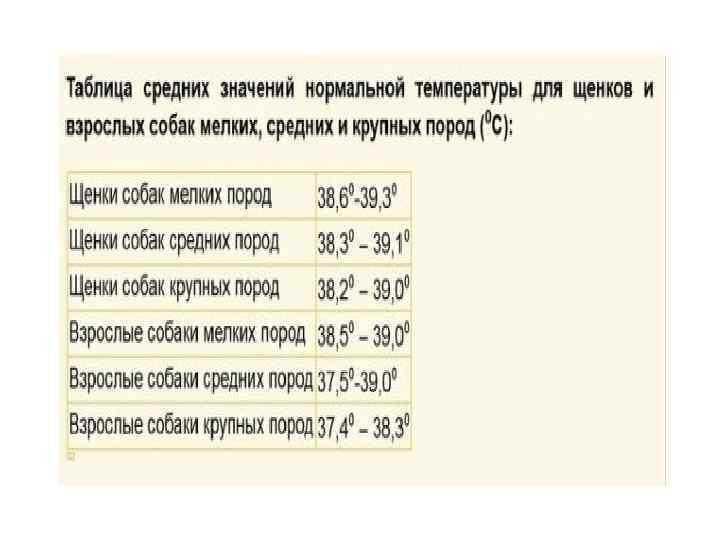 Нормальная температура у собак: какая должна быть