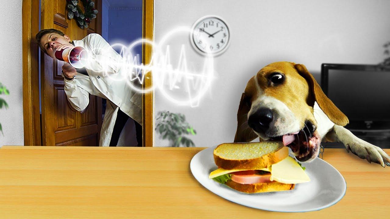 Сколько собака может прожить без еды и воды