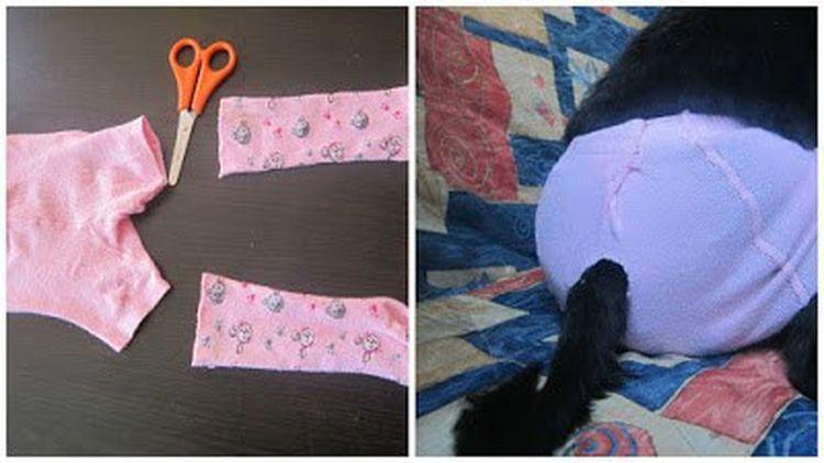 Памперсы для кошек — примеры подгузников для котят и как сделать самому