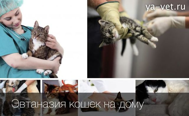 Как усыпить кошку