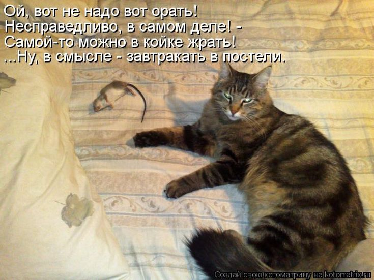 Вещи, которые кошки не любят, но не могут об этом сказать