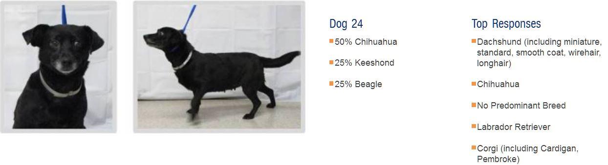 Как узнать породу собаки по внешнему виду щенка