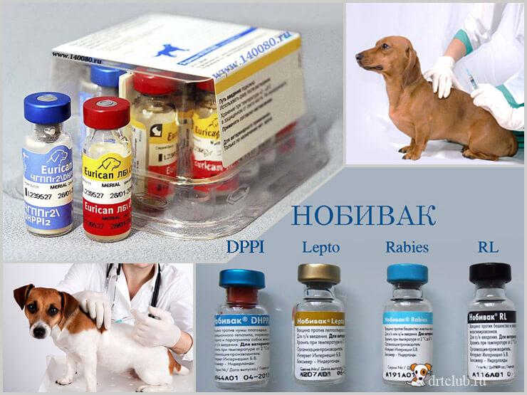 Когда и какие прививки делать щенкам?