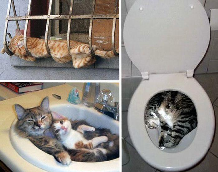 Как приучить кошку к домику и спать в нем