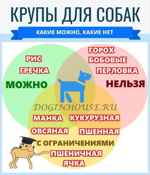 Какие крупы можно давать собакам: можно ли давать кашу