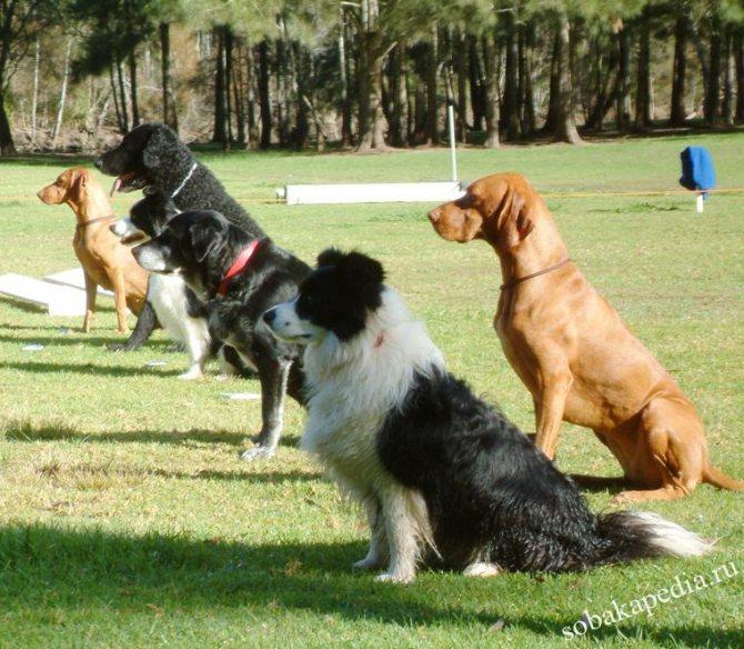 Как научить собаку команде «ко мне» на улице
