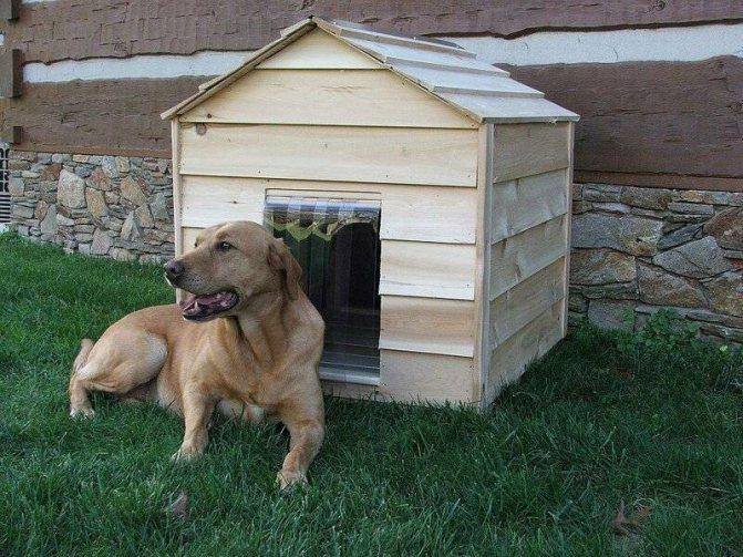 Сколько живут беспородные собаки: реалии жизни на улице и дома