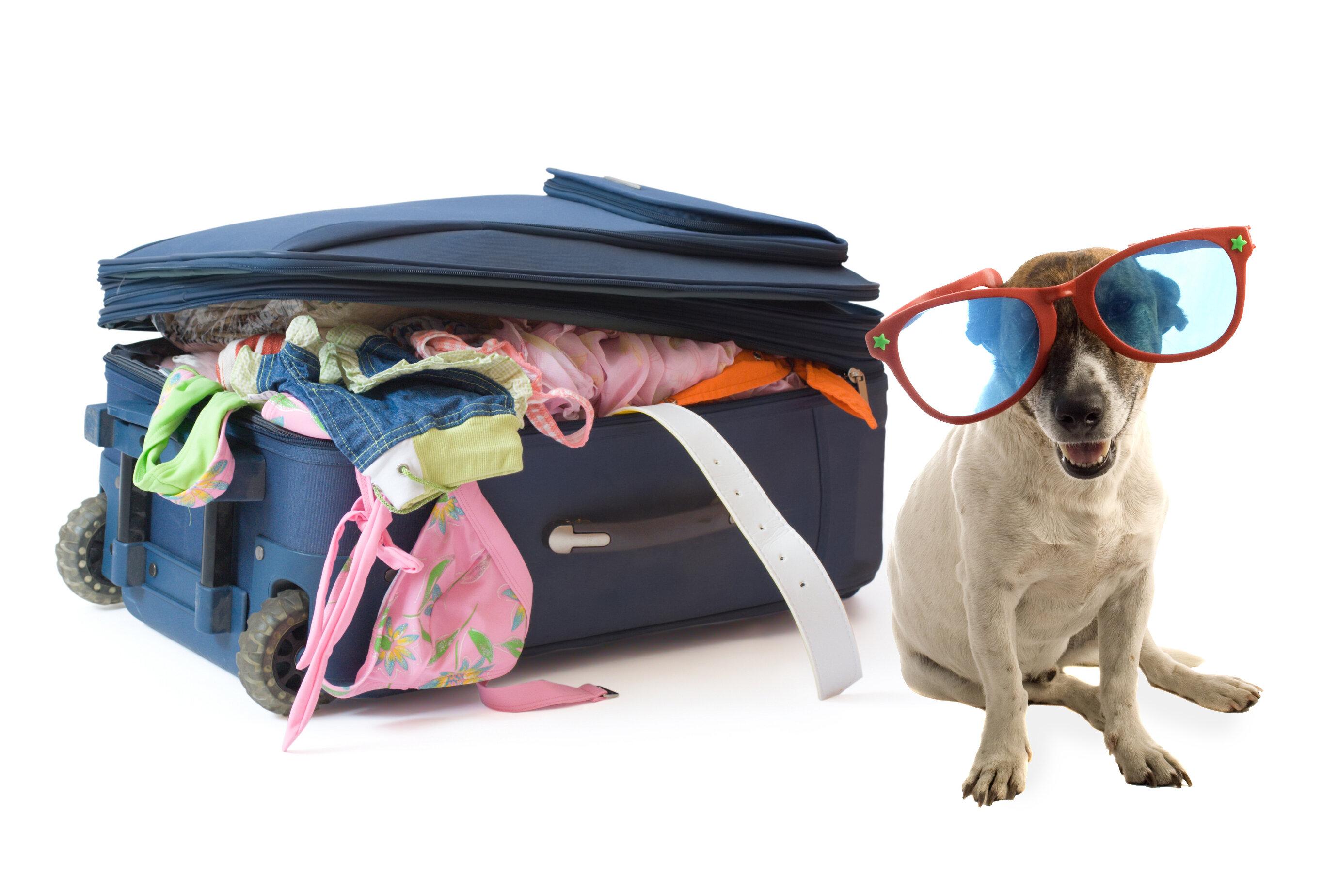 Где оставить собаку на время отпуска хозяев