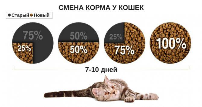 Как организовать питание кошки при имеющихся проблемах с весом