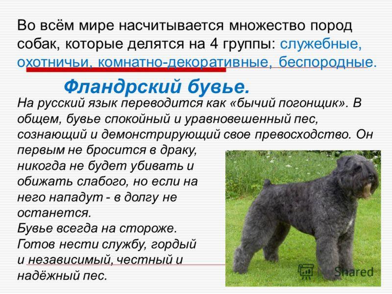 Самая древняя порода собак в мире: обзор