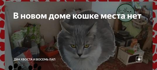 5 признаков того, что кошке не нравится гость квартиры