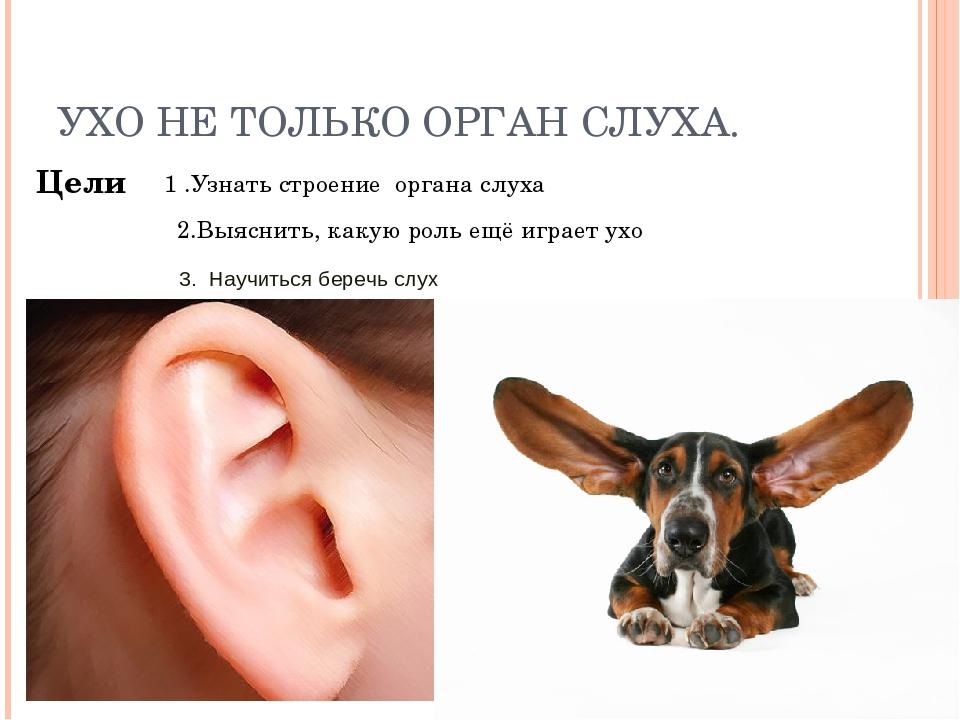 У кота горячие уши: что это может означать