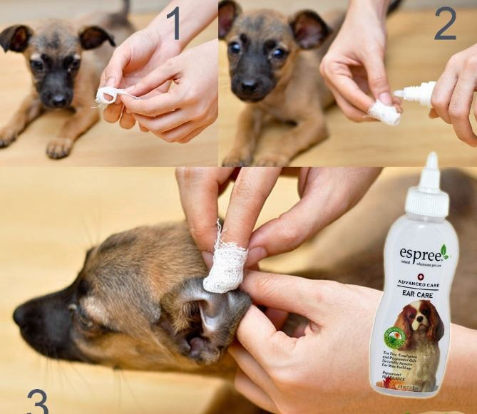 Как почистить уши коту в домашних условиях: варианты как и чем промыть