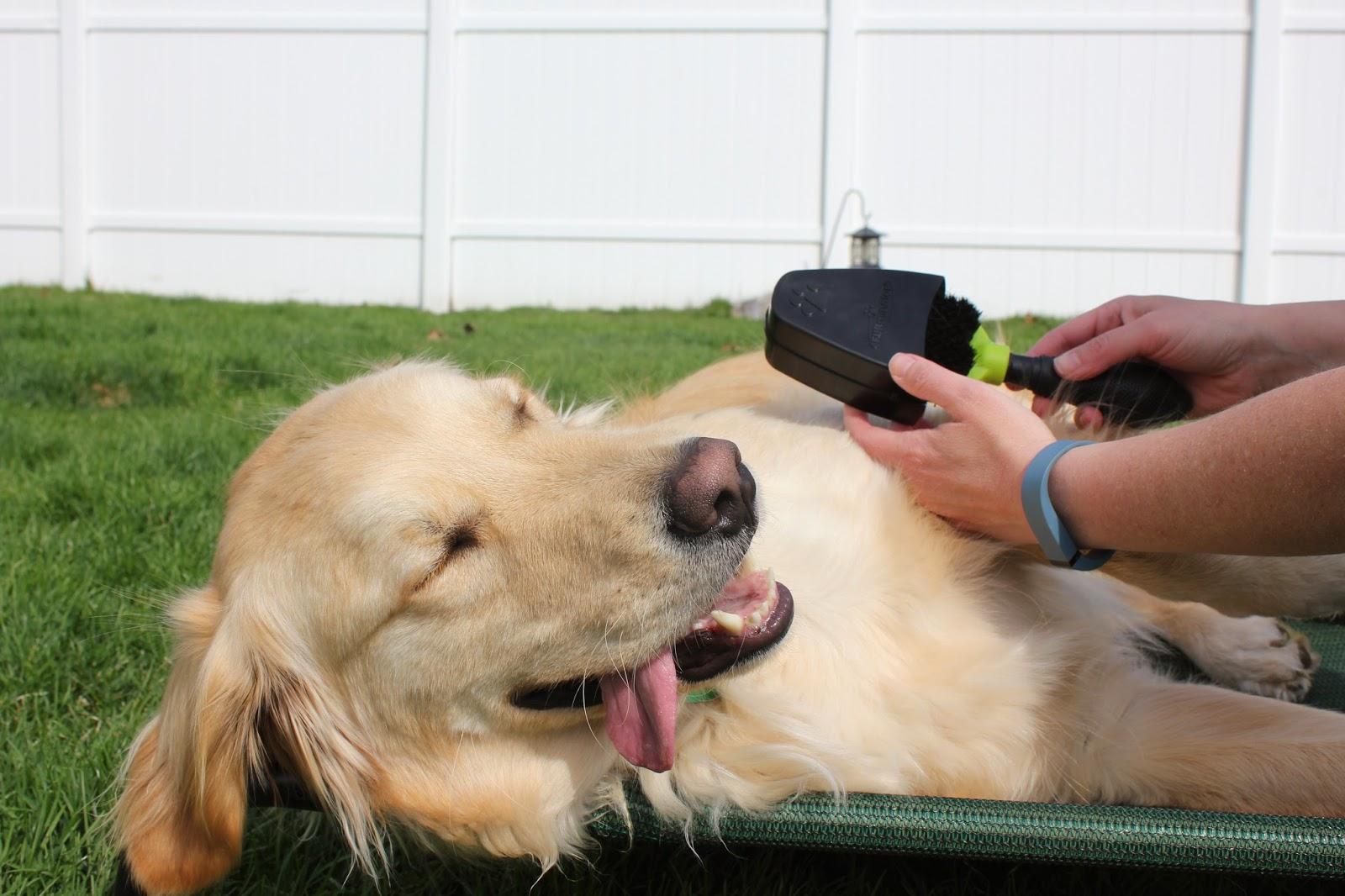 Линька у собак: почему и когда это происходит
