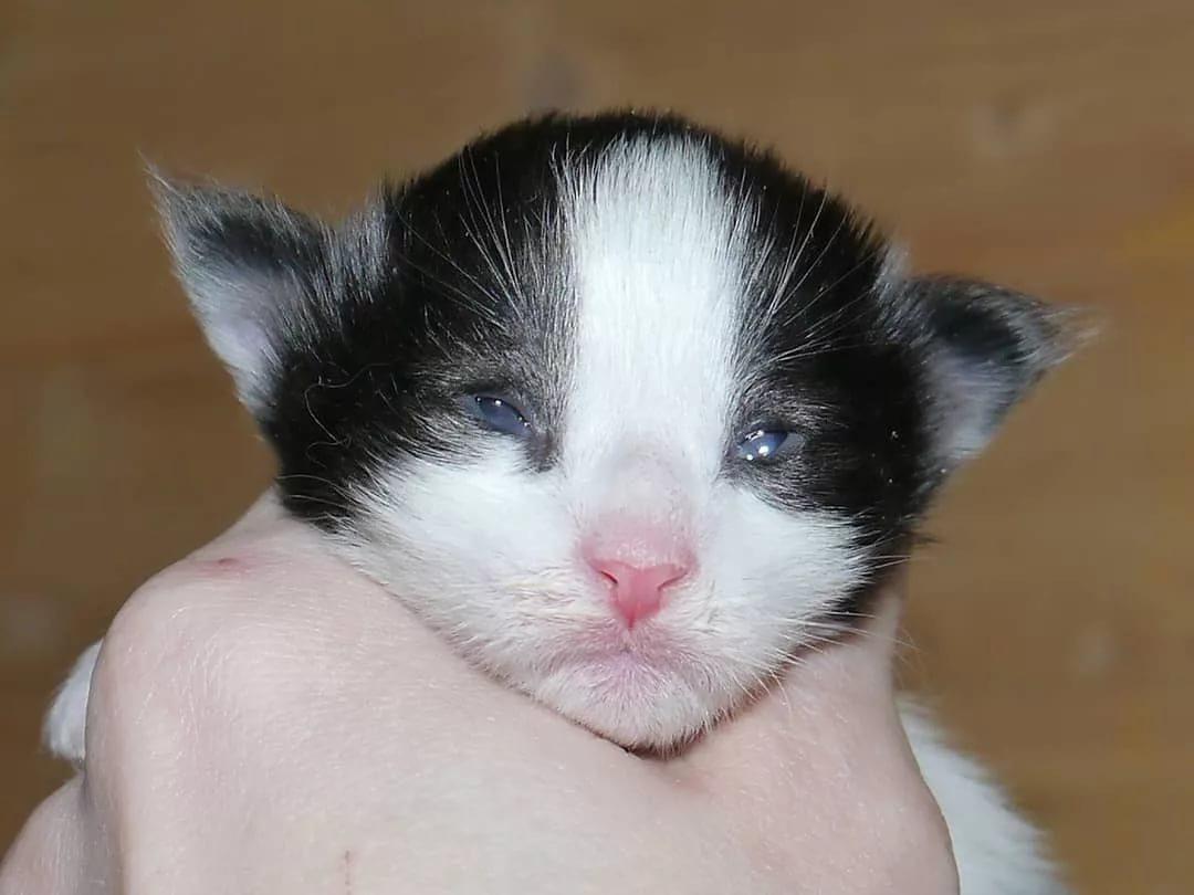 Когда котята открывают глаза: через сколько дней после рождения