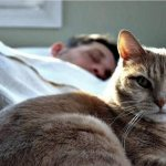 Приметы про кошек и котов