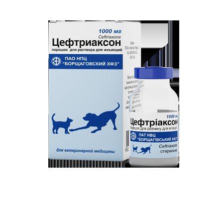 Препарат Цефтриаксон: применение для кошек
