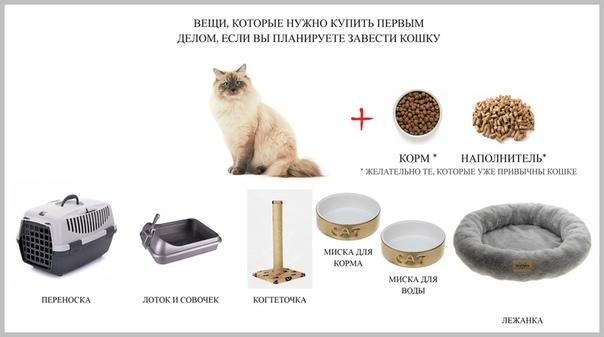 Что нужно для котенка в квартире: список